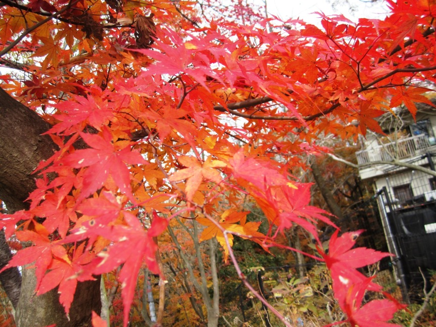Autumn View from Takao-san,Japan